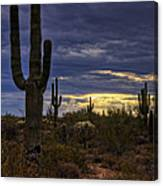 In The Shadow Of The Saguaro  Canvas Print