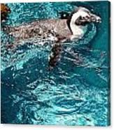 In The Swim Canvas Print