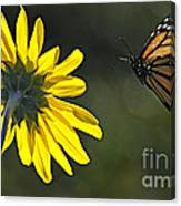 Incoming Monarch Canvas Print
