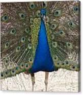 Indian Blue Canvas Print