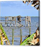 Indian River Roost Canvas Print