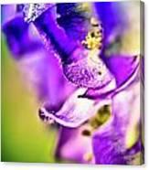 Indigo Flower Canvas Print