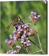 Insect And Flower Canvas Print