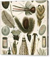 Insect Microscopy, 19th Century Canvas Print