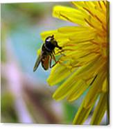 Insect On Flower 2 Canvas Print