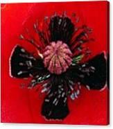 Inside A Poppy Canvas Print