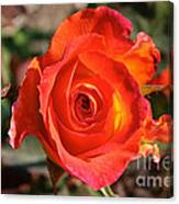 Intense Rose Canvas Print