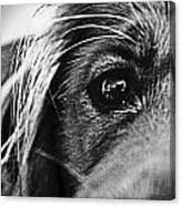 Into Her Eyes Canvas Print