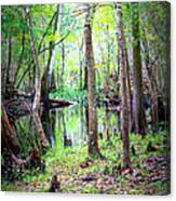 Into The Swamp Canvas Print