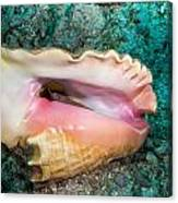 Inverted Conch Canvas Print