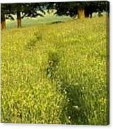 Ireland Trail Through Buttercup Meadow Canvas Print