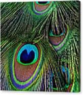 Iridescent Eyes Canvas Print