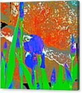 Iris 31 Canvas Print