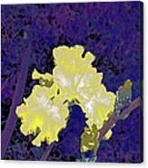 Iris 36 Canvas Print