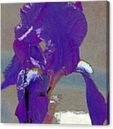 Iris 37 Canvas Print