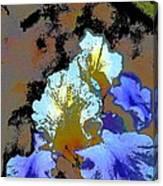 Iris 41 Canvas Print