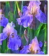 Iris 51 Canvas Print