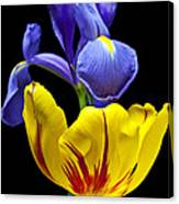 Iris And Tulip Canvas Print