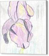 Iris Sketch Canvas Print