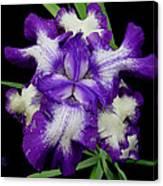 Iris Unfolded Canvas Print