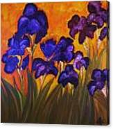 Irises In Motion Canvas Print