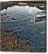 Irish Low Tide Canvas Print