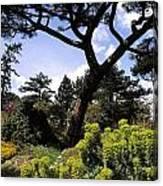 Irish National Botanic Gardens, Dublin Canvas Print