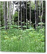 Isle Royale National Park Canvas Print