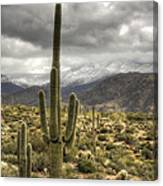It Does Snow In The Desert Canvas Print