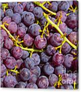 Italian Red Grape Bunch Canvas Print