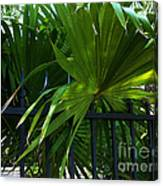 Its Pretty And Tropical In Key West  Canvas Print