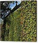 Ivy Covered Chapel Canvas Print