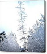 Jack Frost's Ice Forest Canvas Print