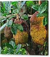 Jack Fruit Canvas Print