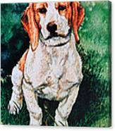 Jack Russell Woogle Canvas Print