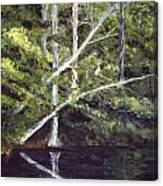 Jackson Bluff On The Waccamaw River Canvas Print