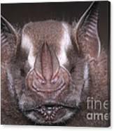 Jamaican Fruit Bat Canvas Print