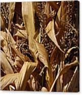 Jammer Corn Abstract 001 Canvas Print
