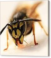 Jammy Wasp Canvas Print