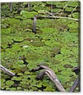 January Lake Lily Pad Canvas Print