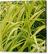 Japanese Forest Grass Canvas Print