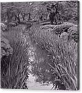 Japanese Garden With Irises Canvas Print