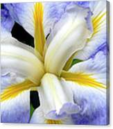 Japanese Iris Canvas Print