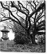 Japanese Lantern And Tree - Liliuokalani Park - Hilo Hawaii Canvas Print
