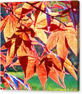 Japanese Maple Leaves 6 In The Fall Canvas Print