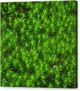 Japanese Moss Canvas Print