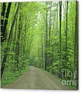 Jasper Woods Canvas Print