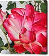 Jean's Roses Canvas Print