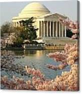 Jefferson Cherry Blossoms Canvas Print