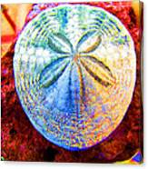 Jeweled Sand Dollar Canvas Print